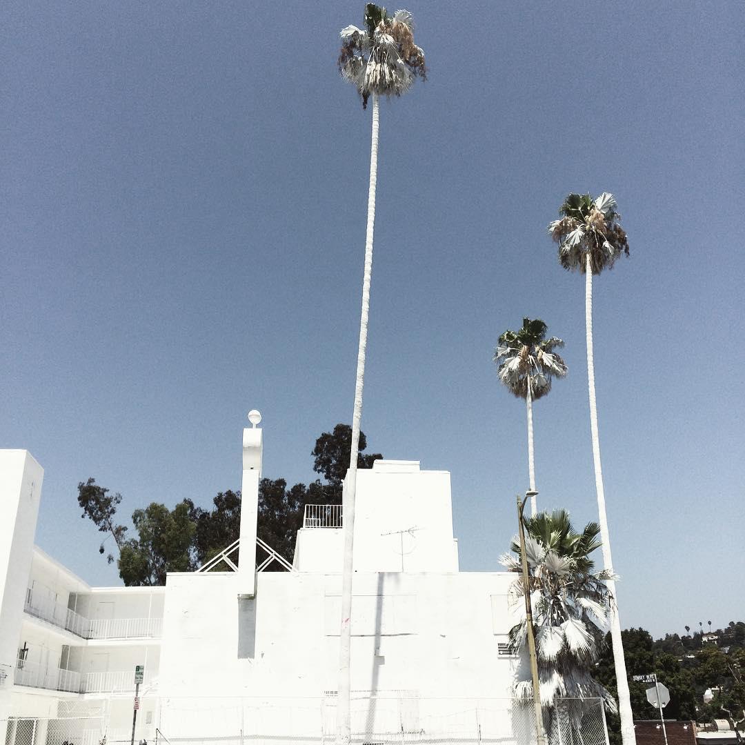 white on white - note the trees - #losangeles #silverlake #losfeliz #roadtrip #whiteonwhite