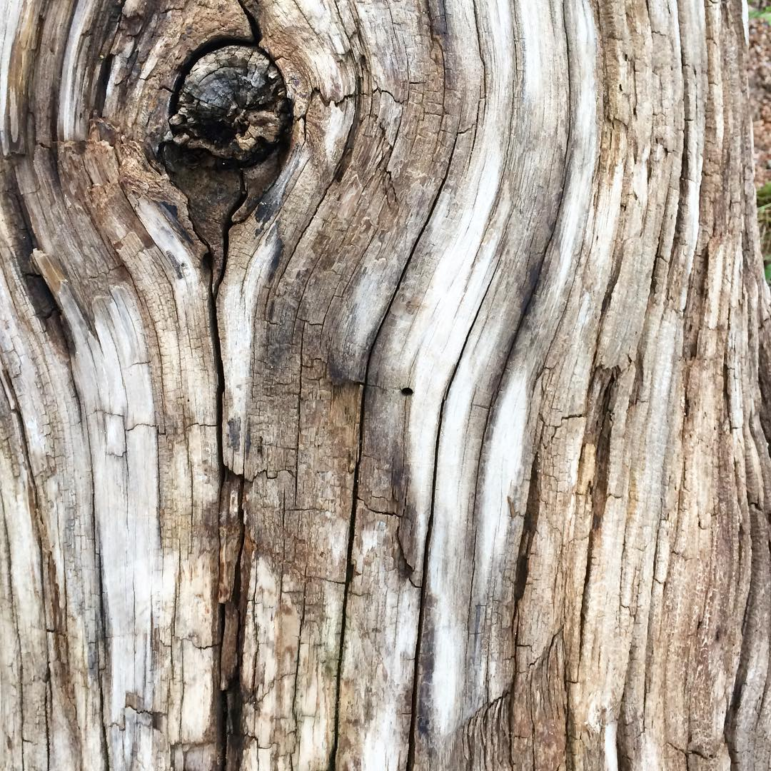 #woodgrain #driftwood
