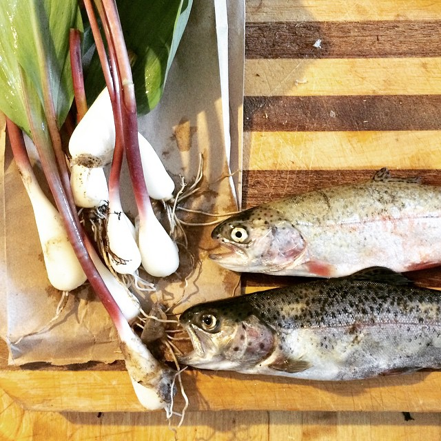 my foraging man did well today… #rainbows and #ramps #forage #wildfood
