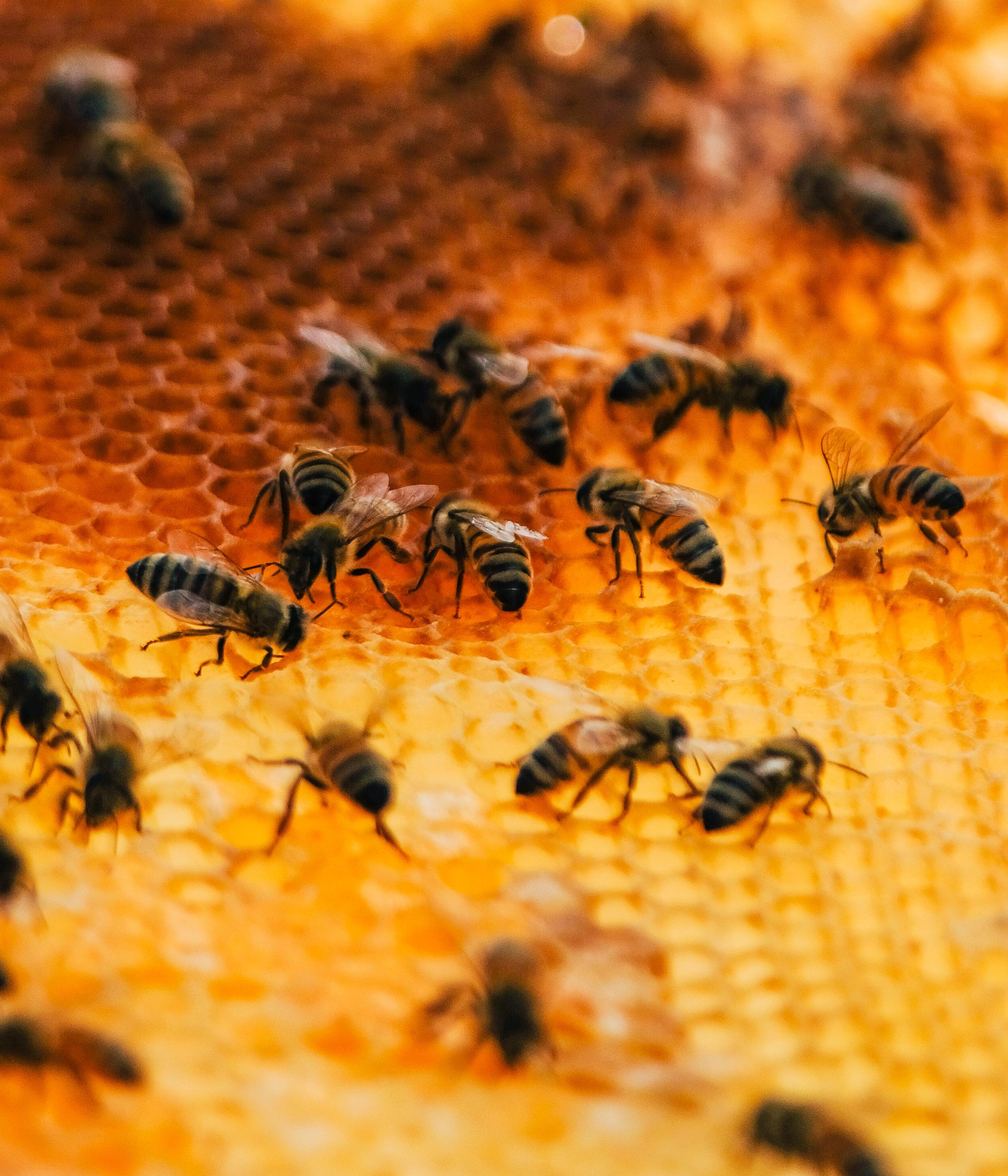 Bees_EmpressGreen-24.jpg