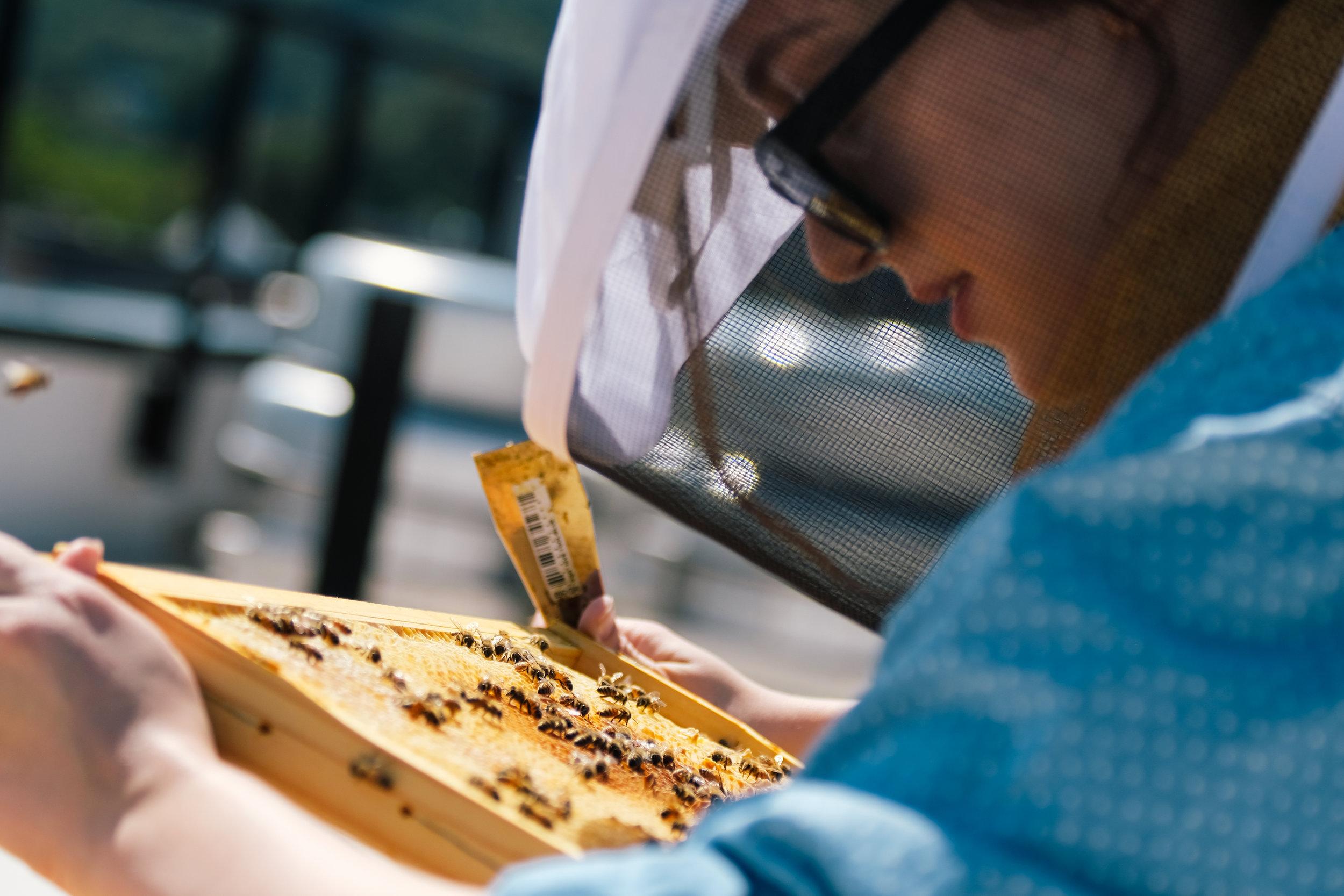 Bees_EmpressGreen-26.jpg