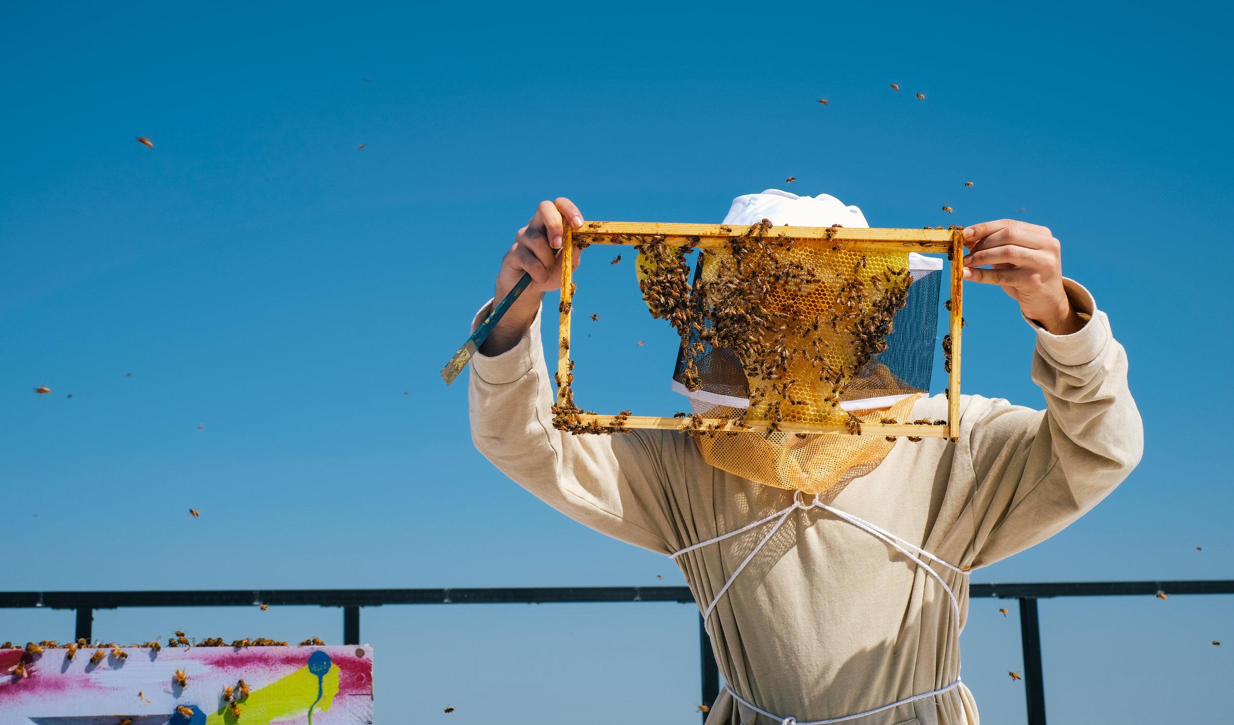 Bees_EmpressGreen-48.jpg