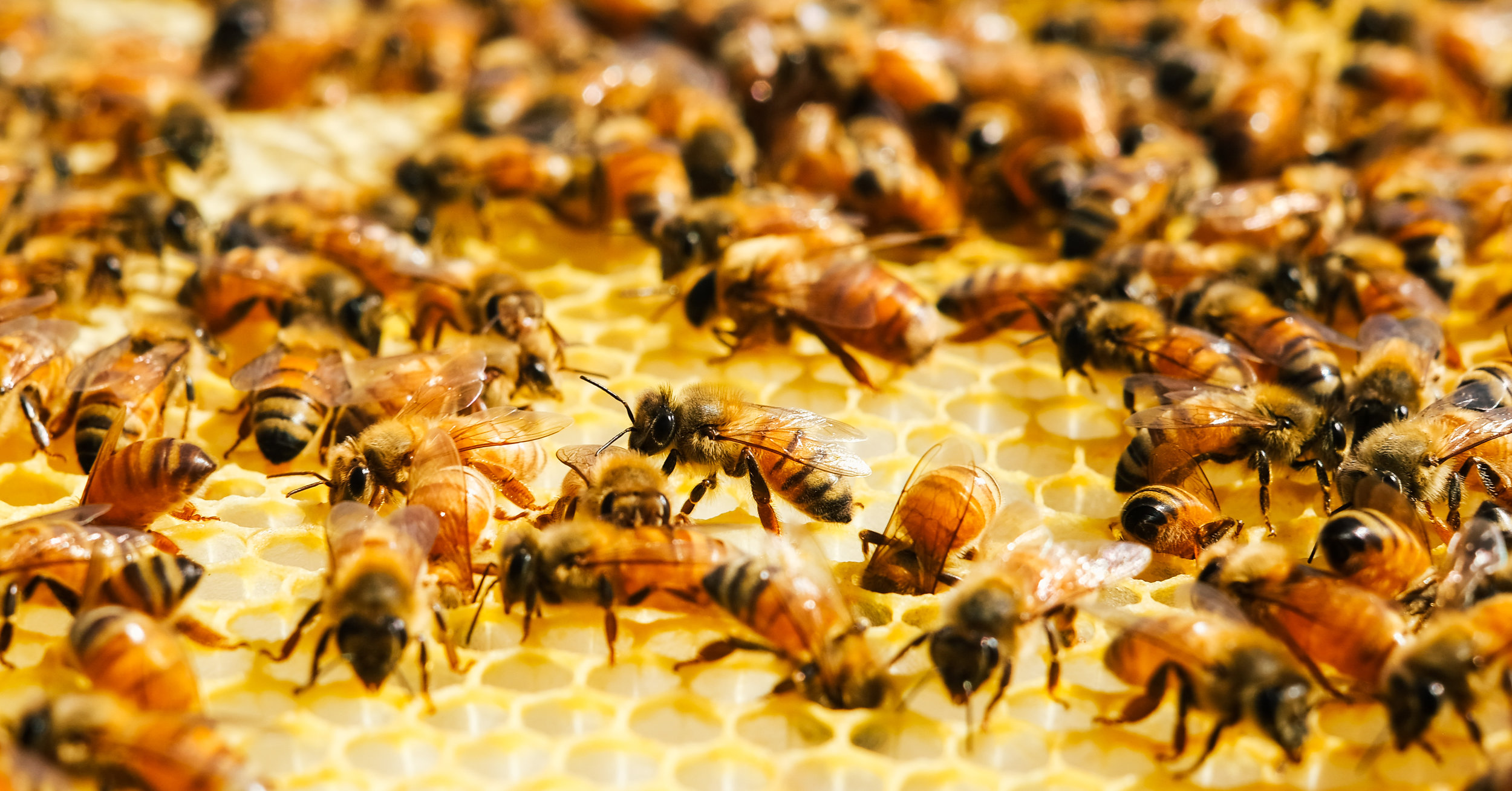 Bees_EmpressGreen-85.jpg