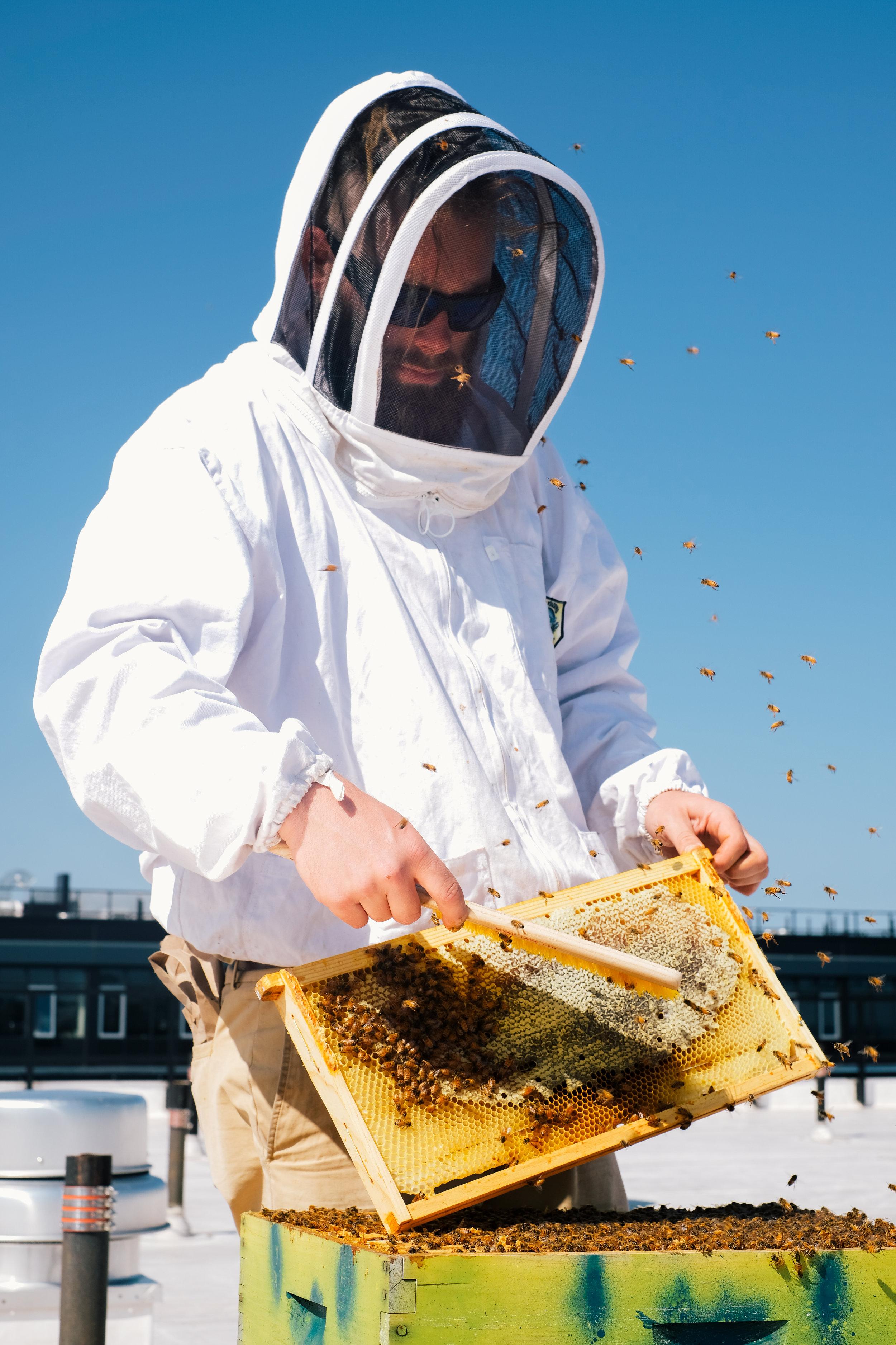 Bees_EmpressGreen-98.jpg