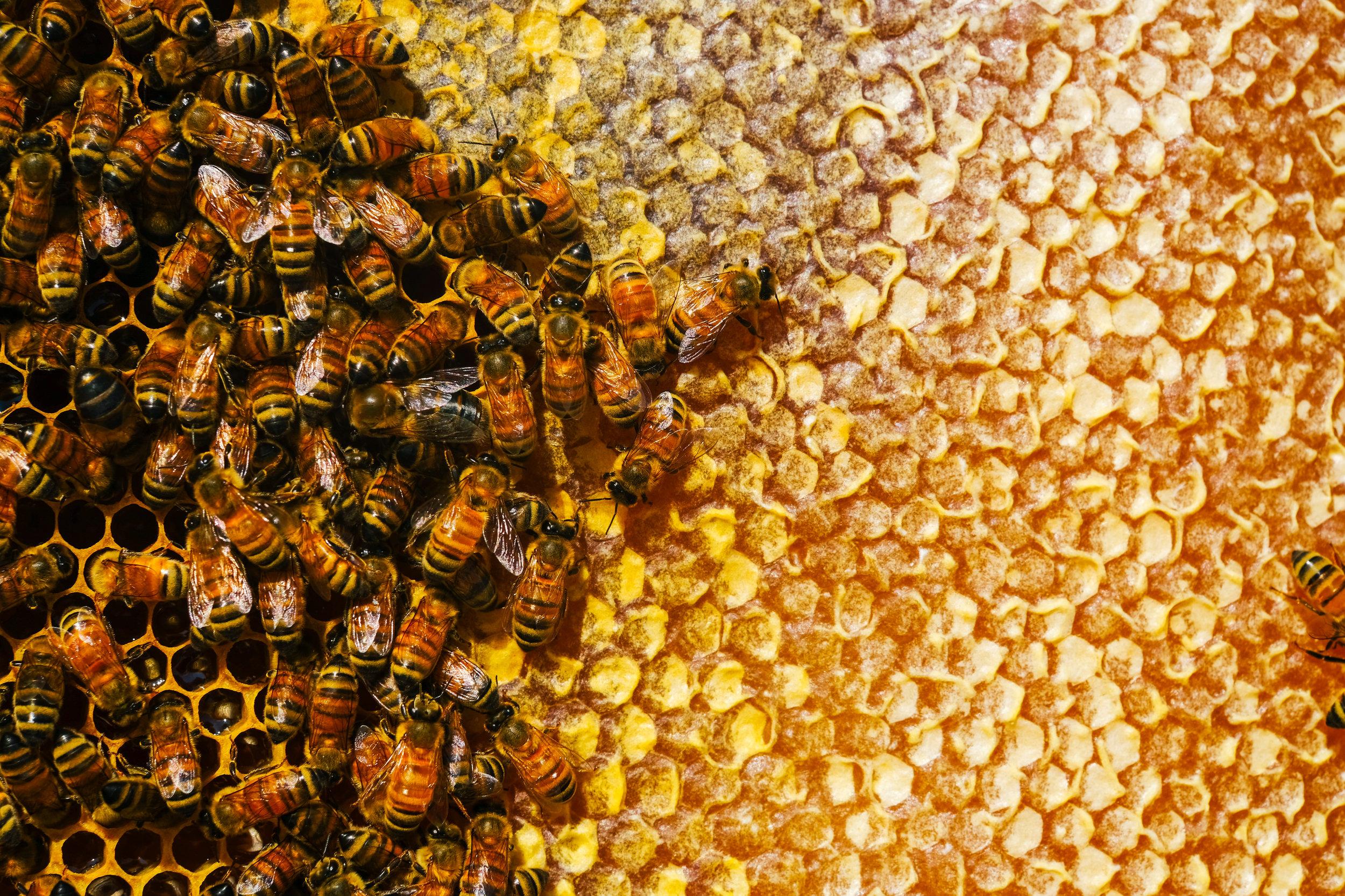 Bees_EmpressGreen-120.jpg