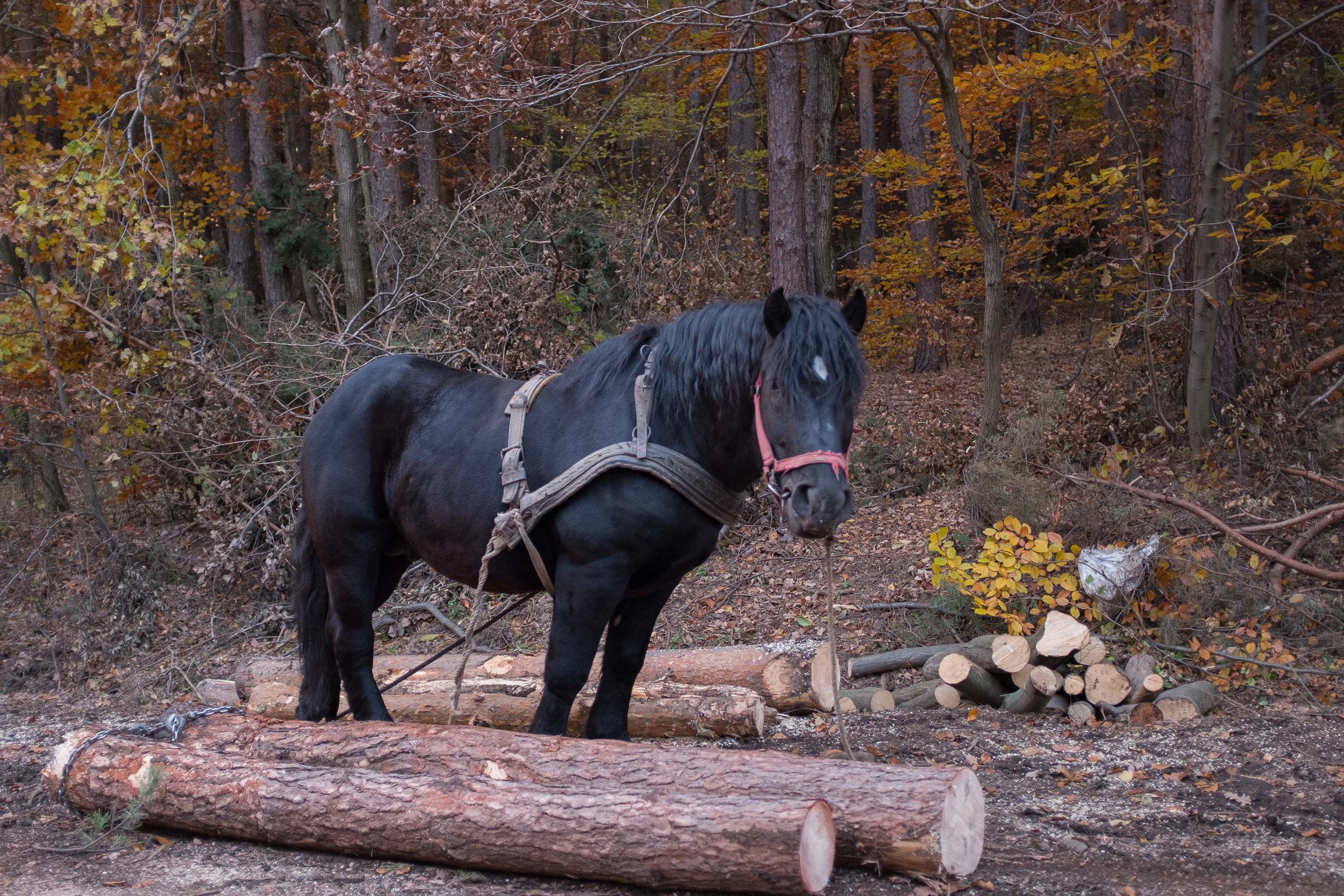 Horse in Hejce