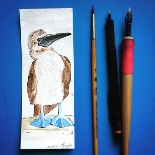 #bluefootedbooby #bookmark  Medium and tool: . #watercolor on hot press watercolor paper. #dippen #brausesteno #bluepumpkin #nib. . #designer #sketches #painting #birds #uxdesigner #painter