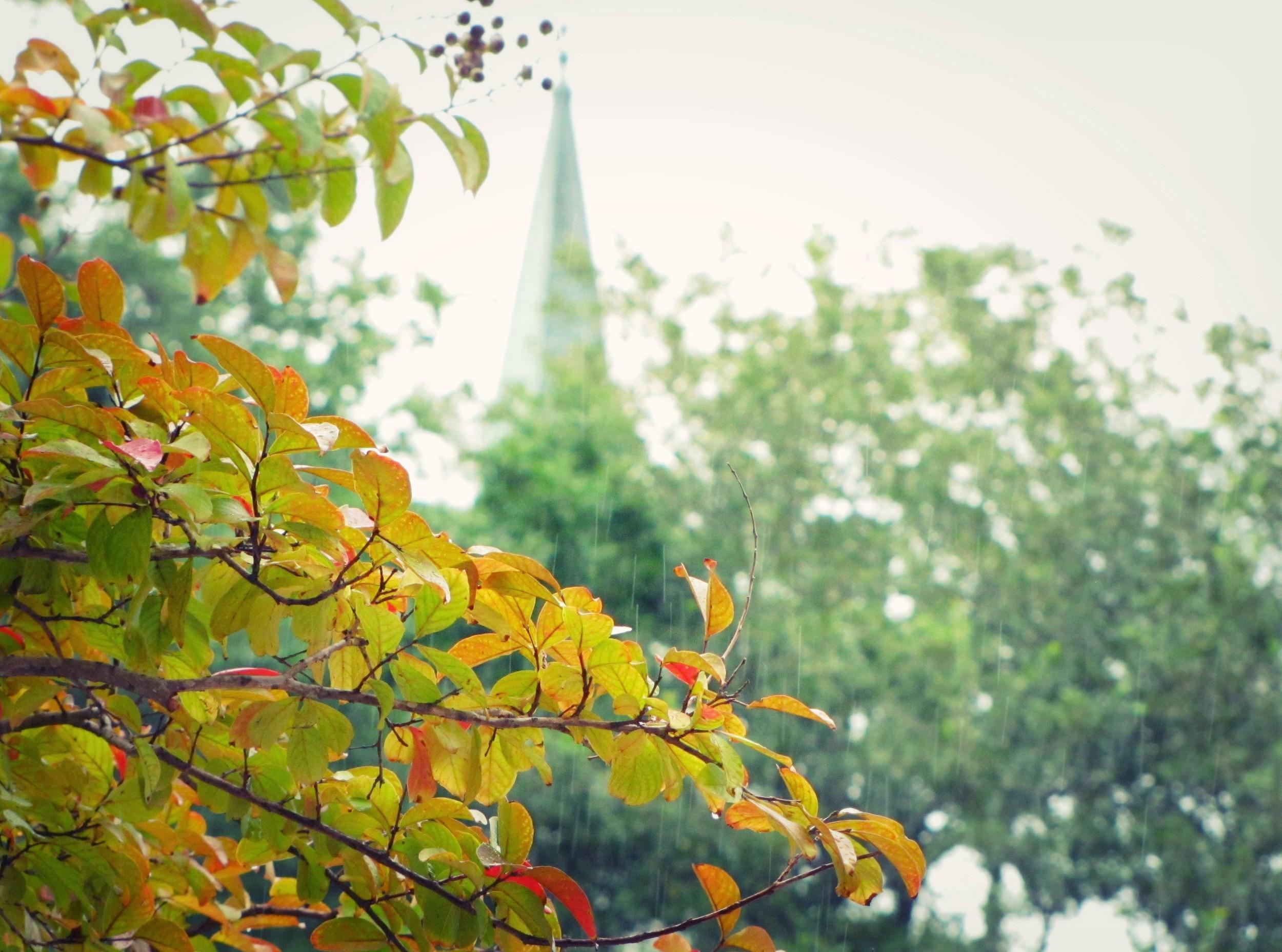 jacksonville florida san marco trees steeple