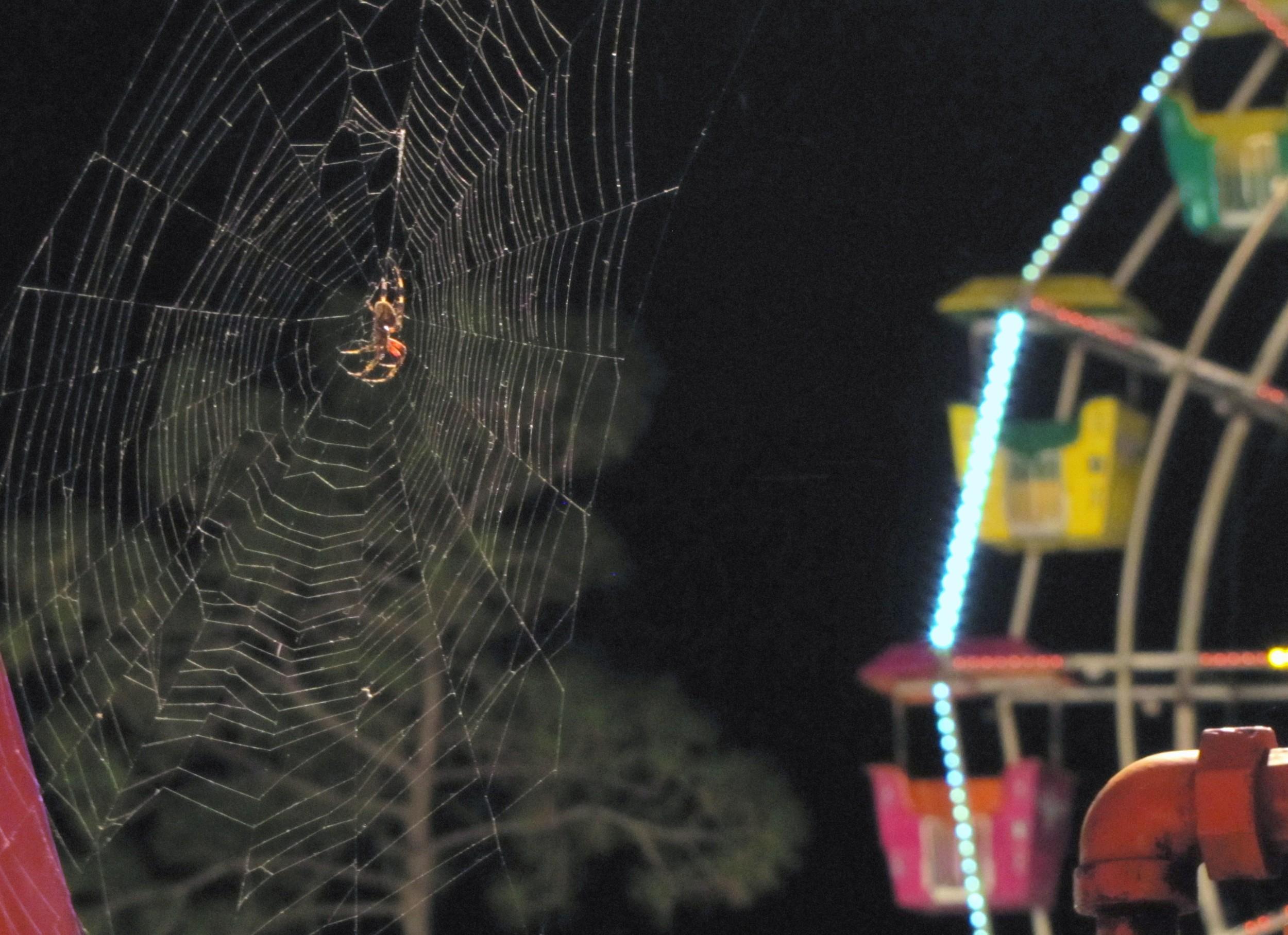 carnival spider web ferris wheel