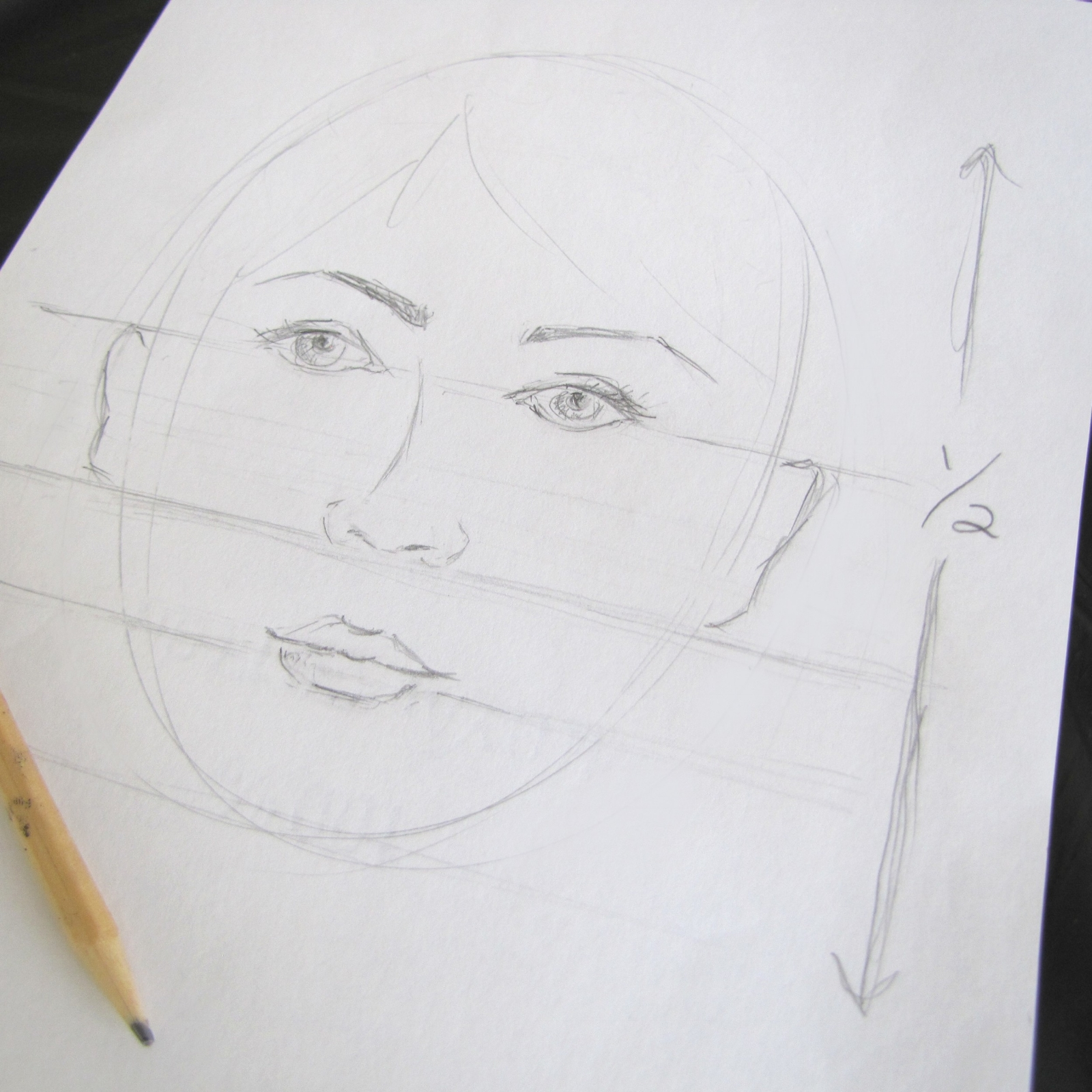 face drawing proportions
