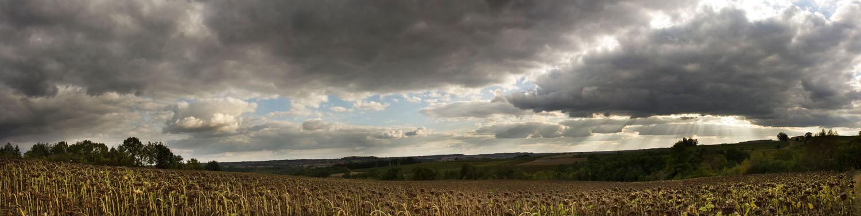 Sunflower fields - Gaillac, France