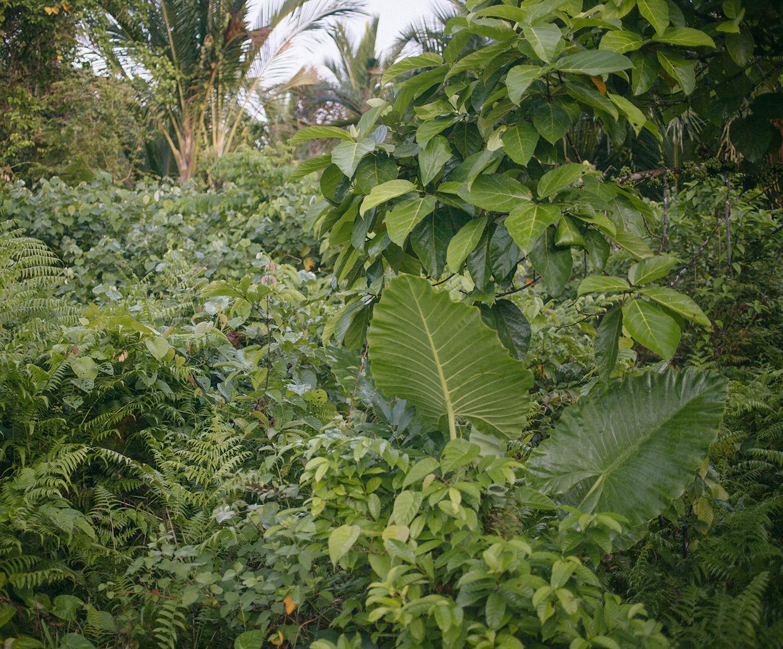 The jungle near the village of Buttui, Siberut.