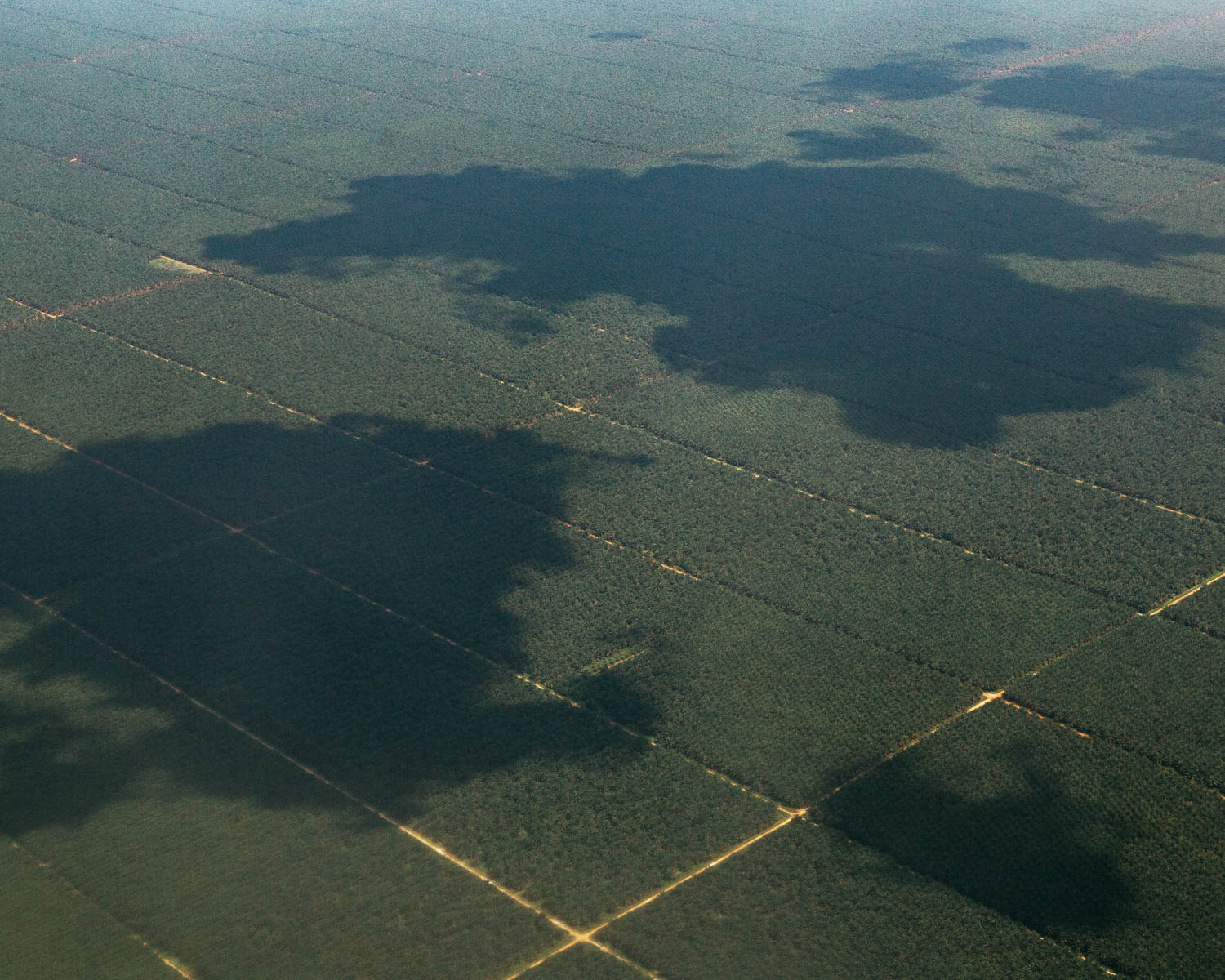 Grids of palm oil plantations in Central Kalimantan as seen from the air. In the last decades, Kalimantan (Indonesian part of Borneo) has lost significant proportion of its forest due to illegal logging and palm oil businesses.