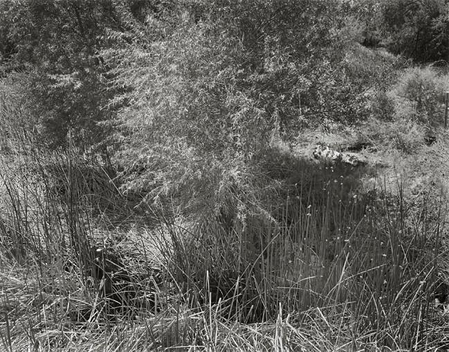 15-Richard Boutwell_Lower Owens River Project_19.jpeg