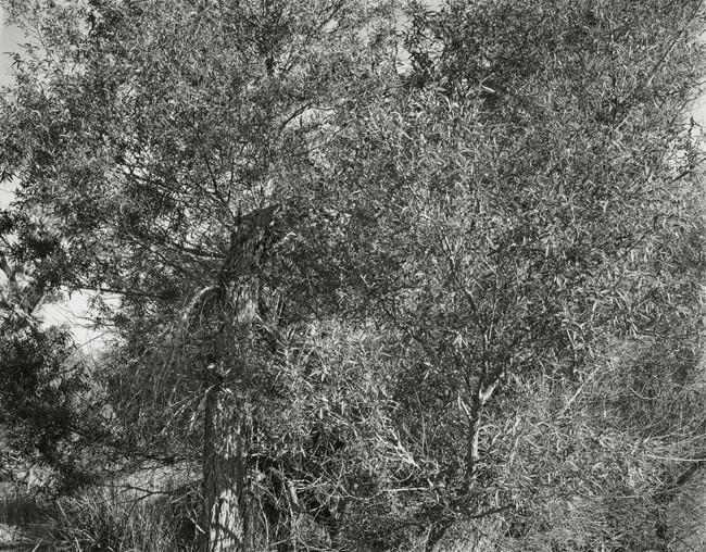 16-Richard Boutwell_Lower Owens River Project_20.jpeg