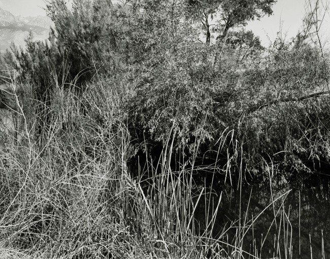 13-Richard Boutwell_Lower Owens River Project_14.jpeg