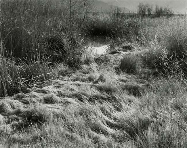 12-Richard Boutwell_Lower Owens River Project_13.jpeg