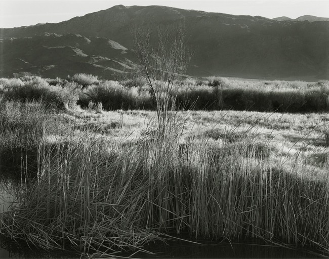 11-Richard Boutwell_Lower Owens River Project_11.jpeg