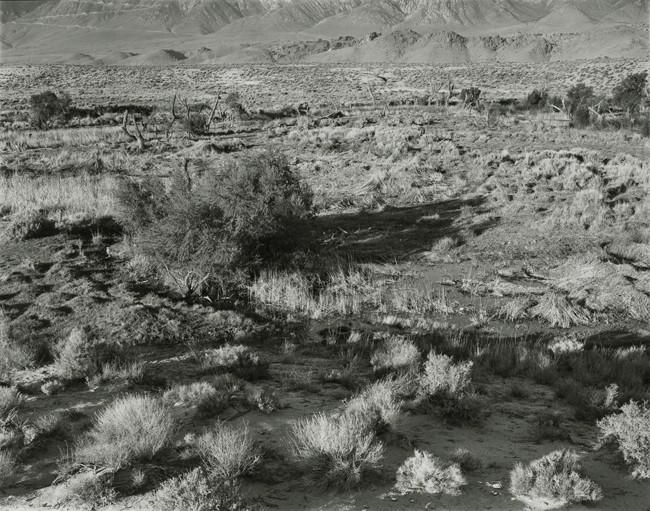 03-Richard Boutwell_Lower Owens River Project_10.jpeg