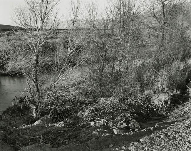 04-Richard Boutwell_Lower Owens River Project_02.jpeg