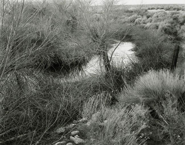 01-Richard Boutwell_Lower Owens River Project_01.jpeg