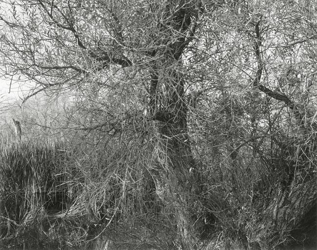 Richard Boutwell-LORP-0711-8.jpg