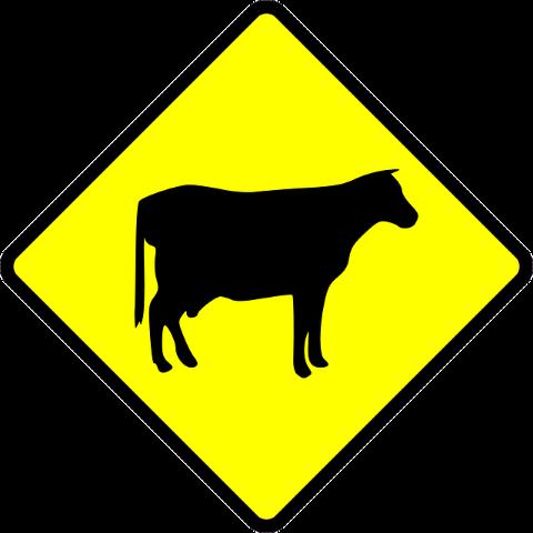 yellow-cow