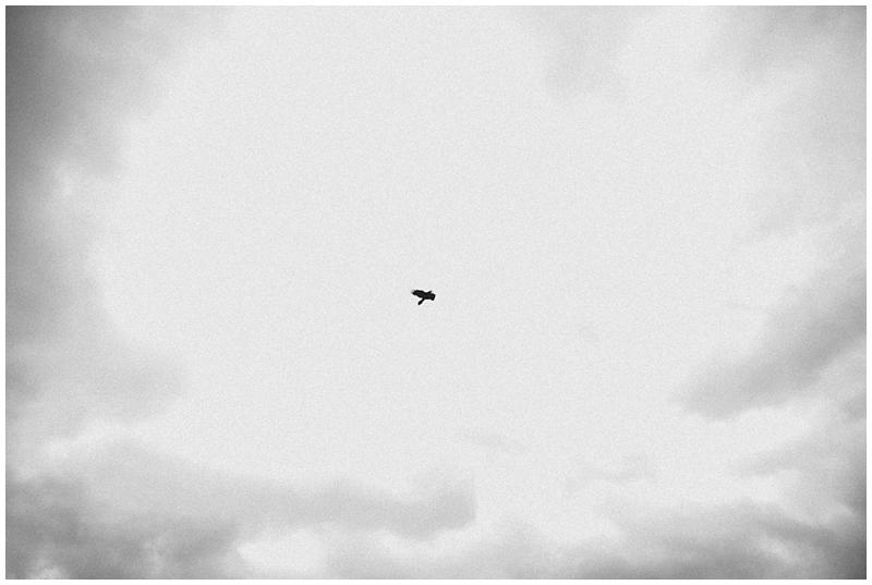 crow-scotland-glencoe-skyfall