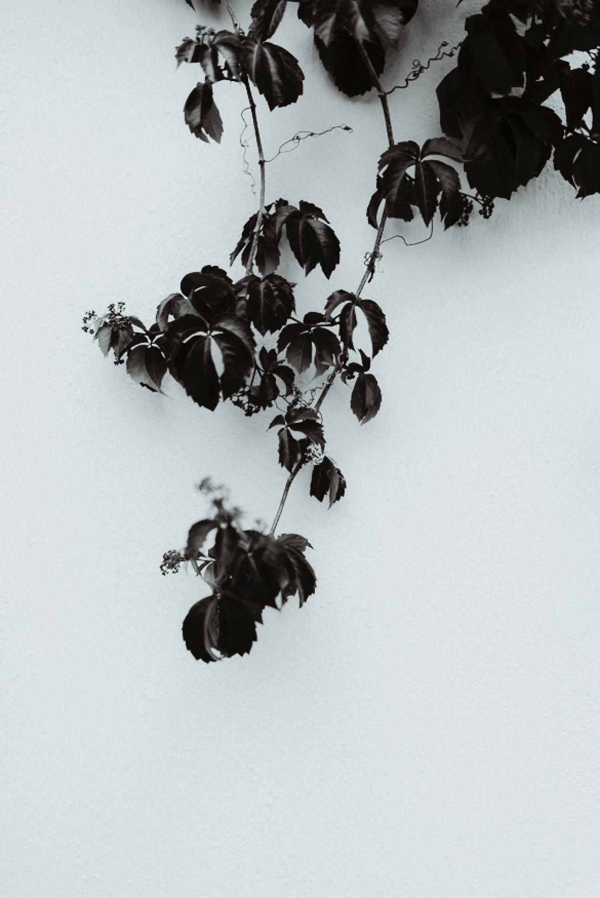 santorini-details-love-session