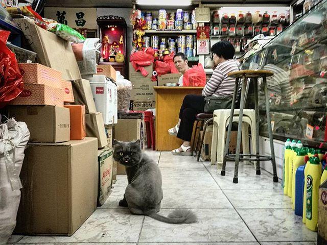 Grumpy old cat guarding the shop. #street #streetphotography #catography #catsaroundtheworld #pussytatsfromeverywhere #seniorcat #shopcat #hongkong #grumpycat #hkig