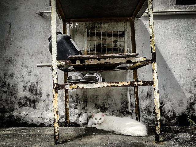 Chillaxing cat. #catstagram #catsofinstagram #cat  #pussytat #catsaroundtheworld #animal #pussytatsfromeverywhere #streetphotography #streetcat #hongkong #hkig #kanmanphotography #pawsofinstagram
