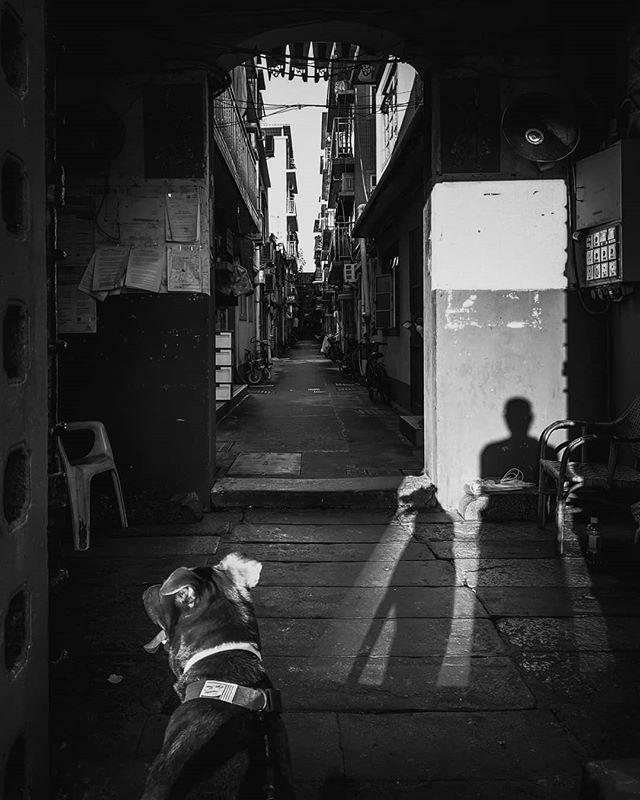 Life is but a walking shadow. #street #streetphotography #selfie #blackandwhite #blackandwhitephotography #mydogandi #dog #dailylife #shadow #kanmanphotography #hongkong #hkig #hk