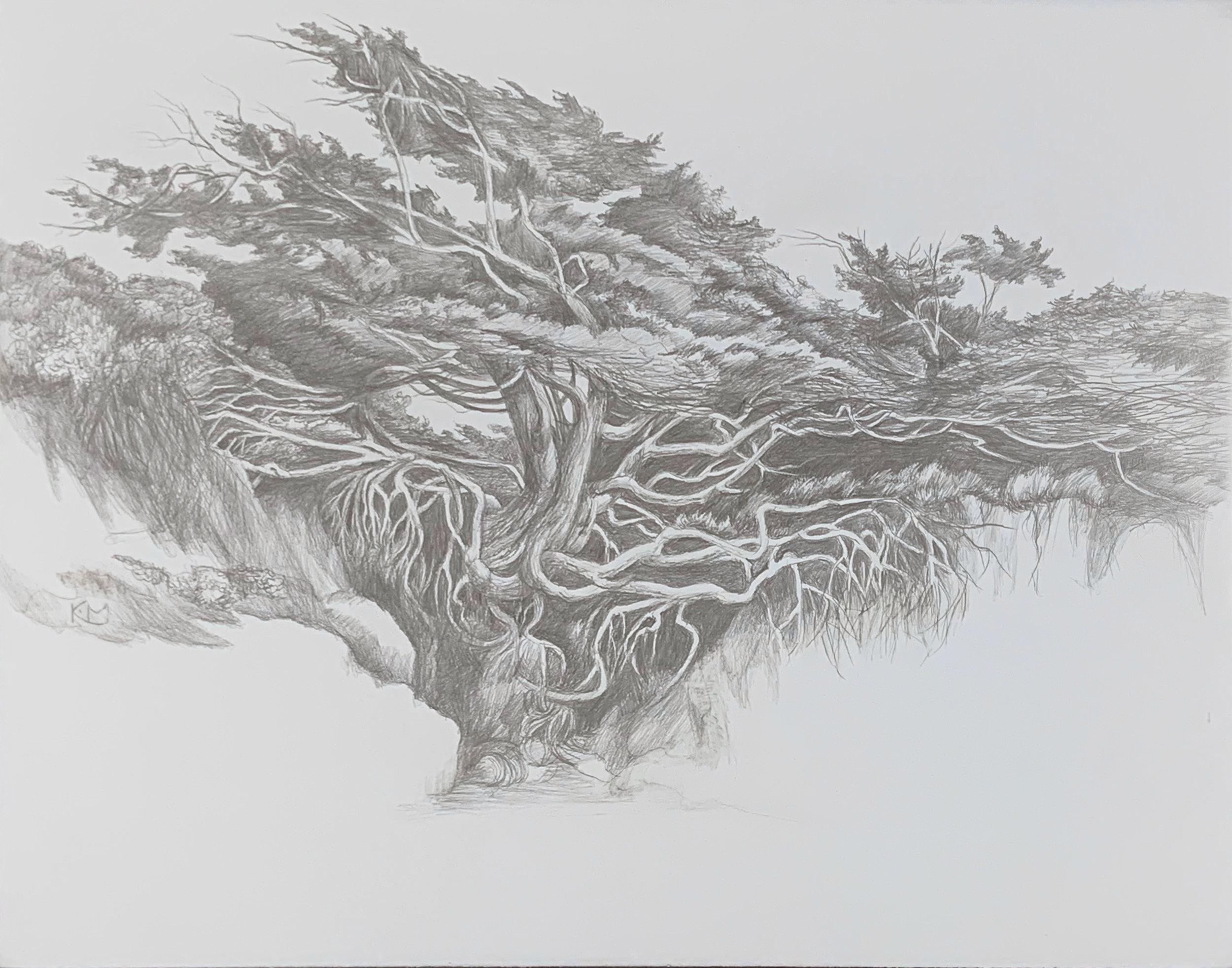 """""""Kalaloch Tree"""""""