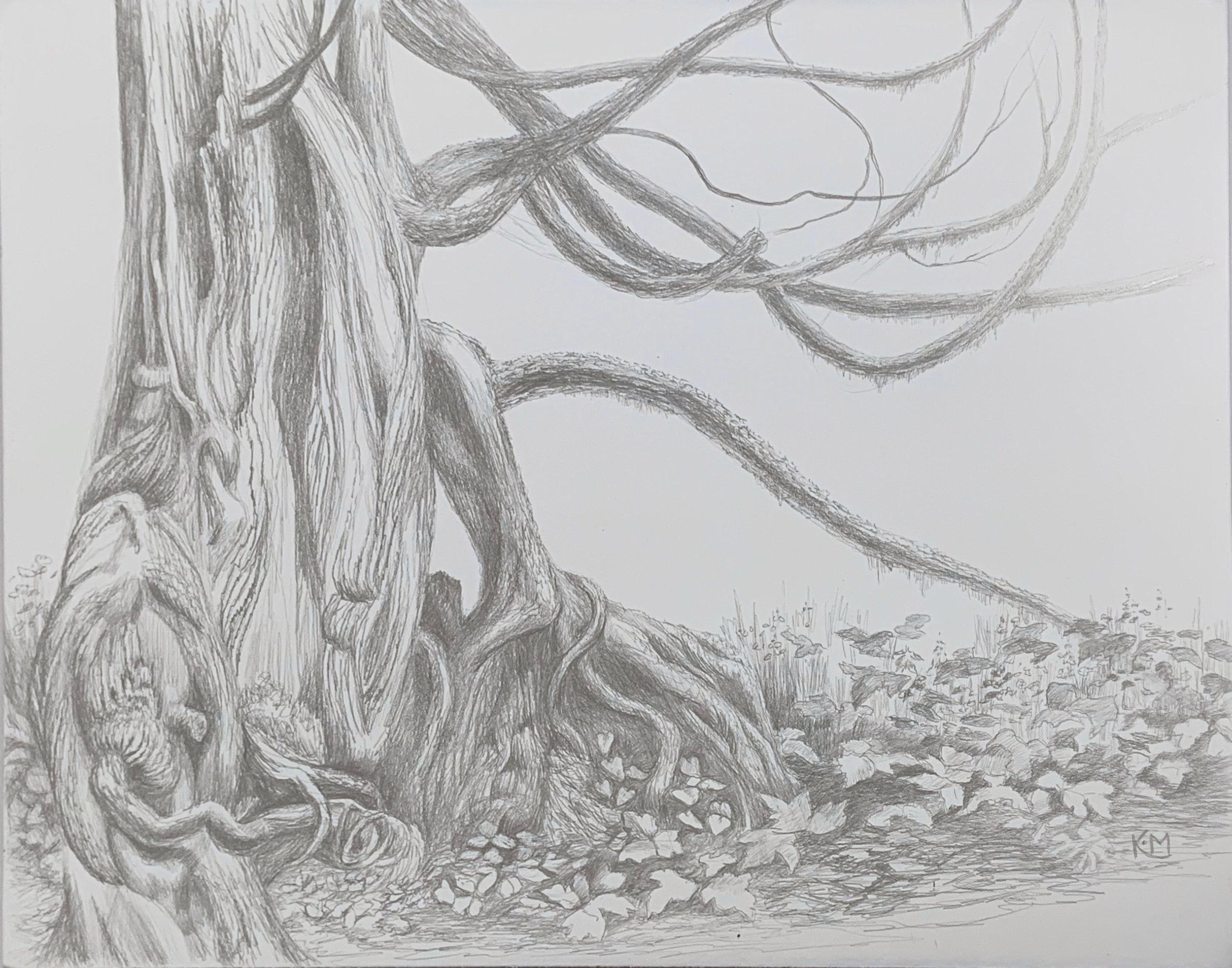 """""""Old Cedar"""""""
