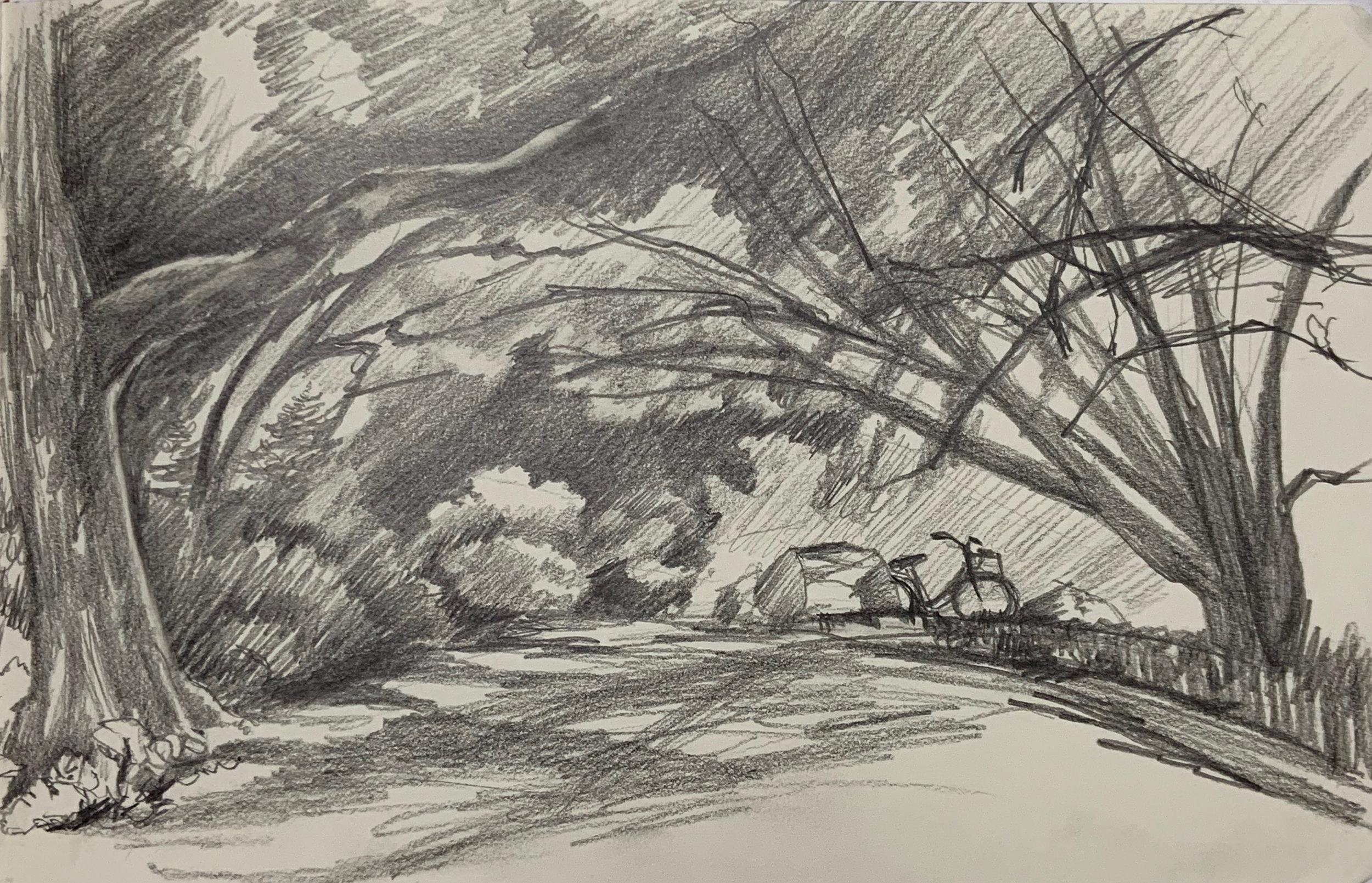 """""""Arboretum Sketch"""""""