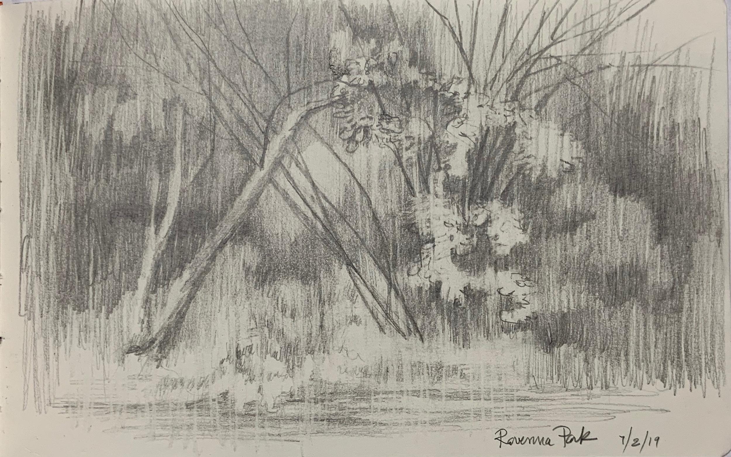 """Ravenna Park in Rain Sketch"""