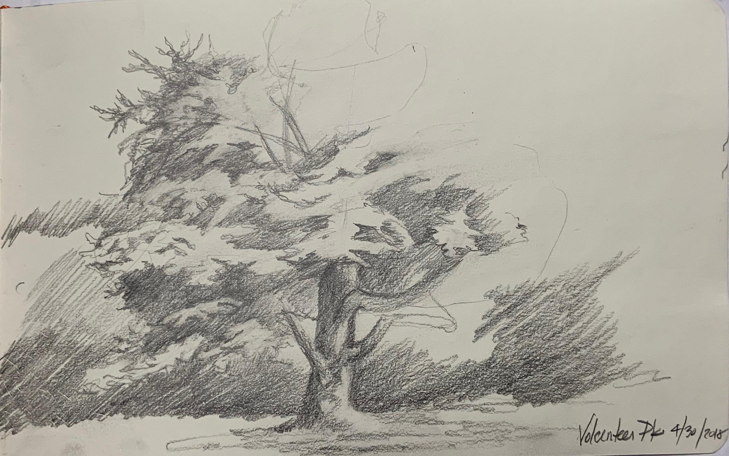 """""""Volunteer Park Sketch of Tree"""""""