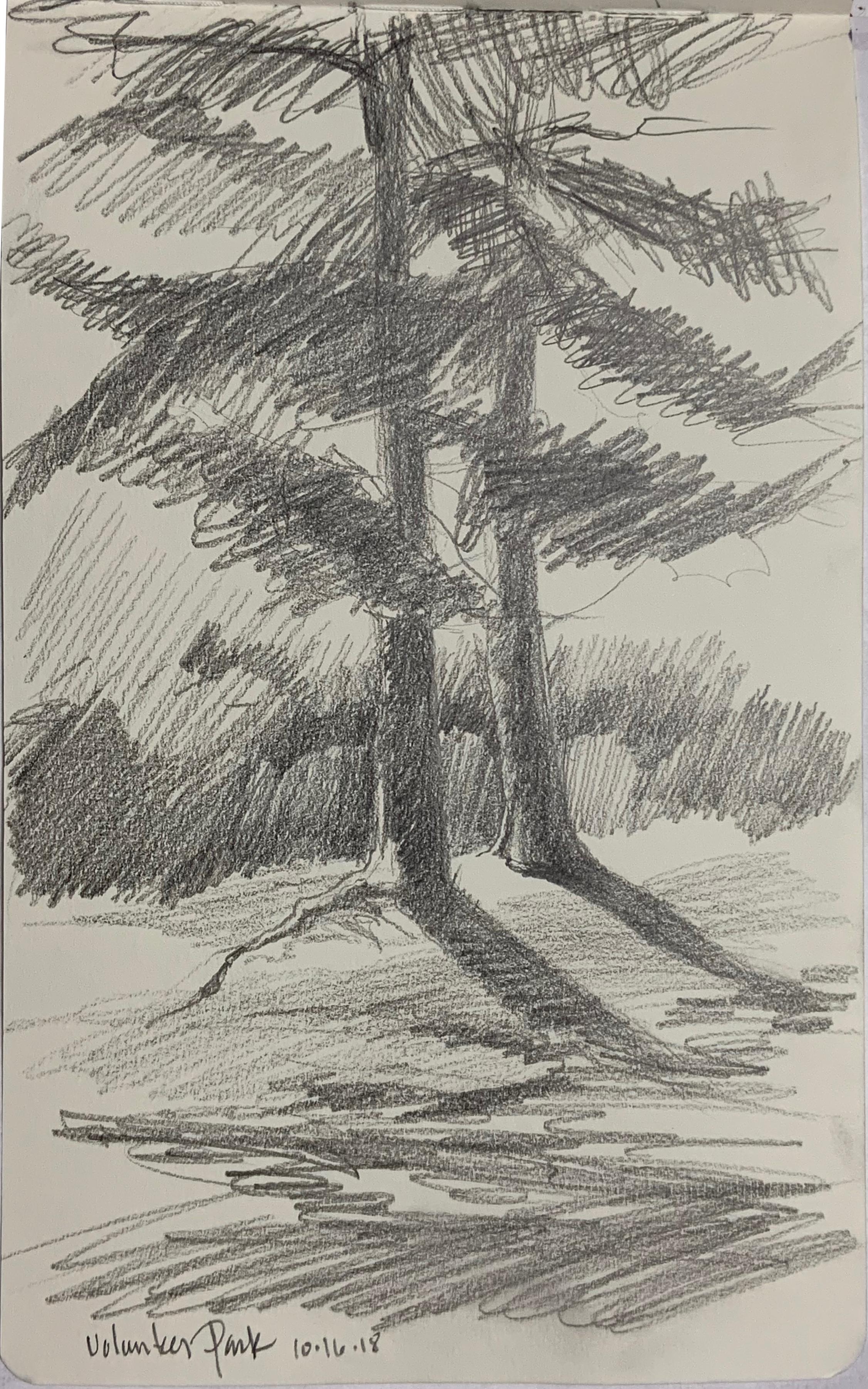 """""""Volunteer Park Sketch Two Trees"""""""