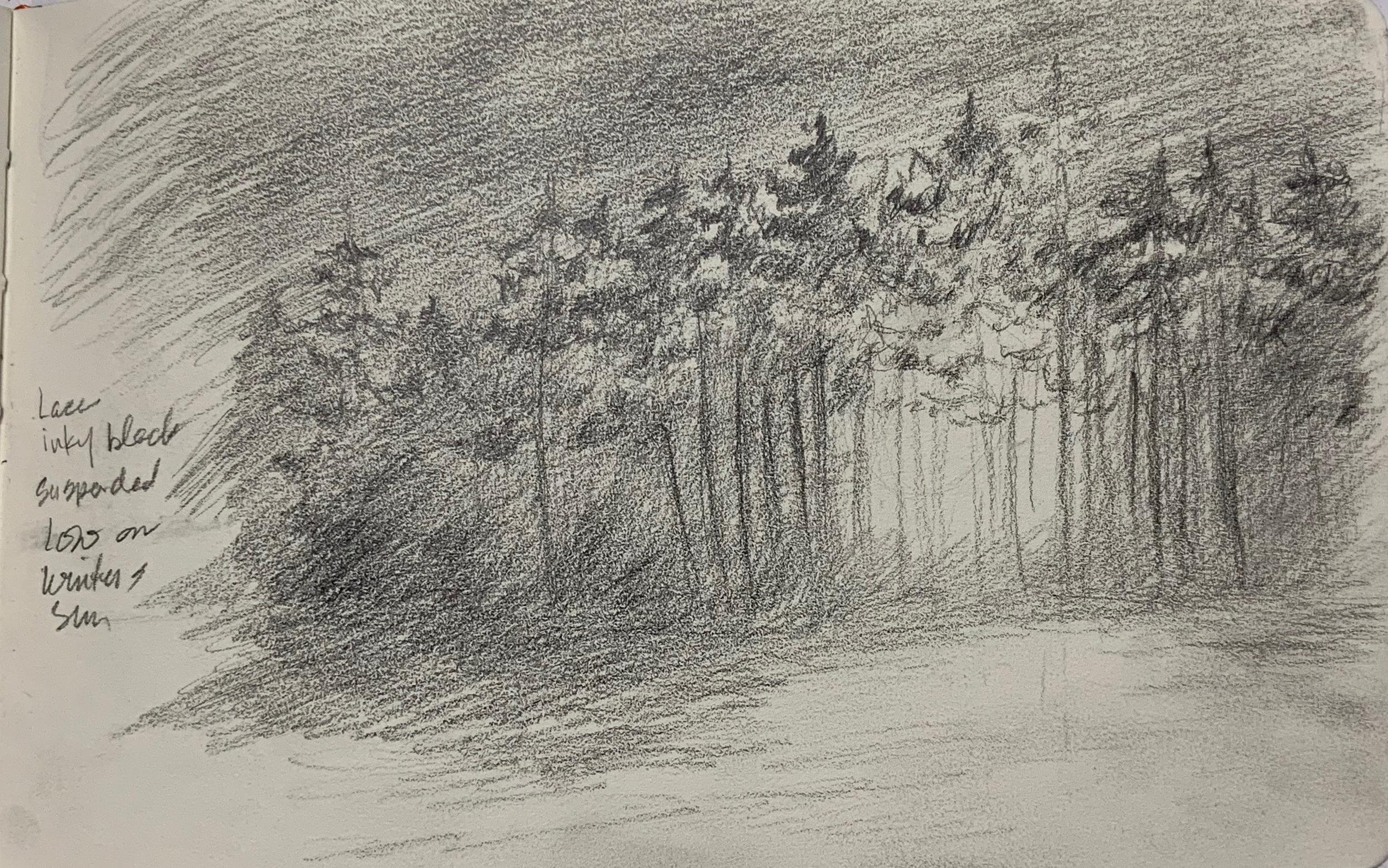 """Winter Sun Through Trees Sketch"""