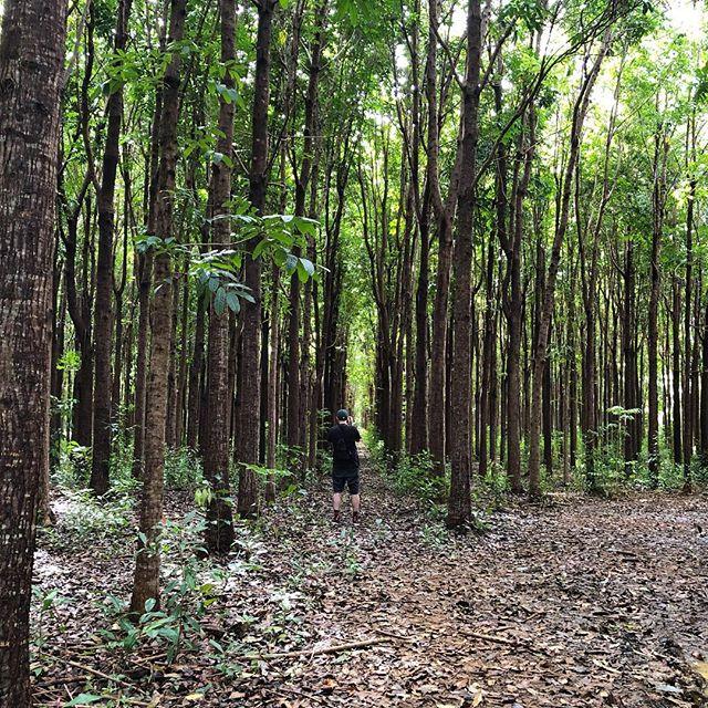 Walked through a mahogany forest | Kauai 🌴 - #mahogany #forest #kauai #hourfun #symmetry #nature #optoutside #travel #latergram #hawaii #waikoa