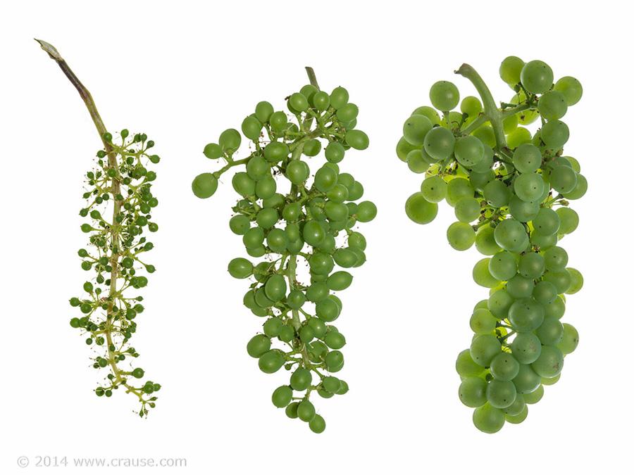 Cultivars_15.jpg