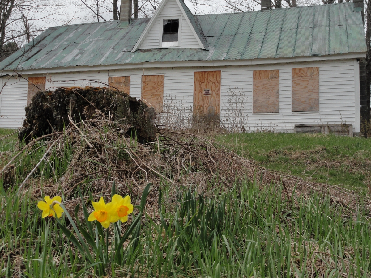 Winter is now an abandoned house. Viva spring!!!