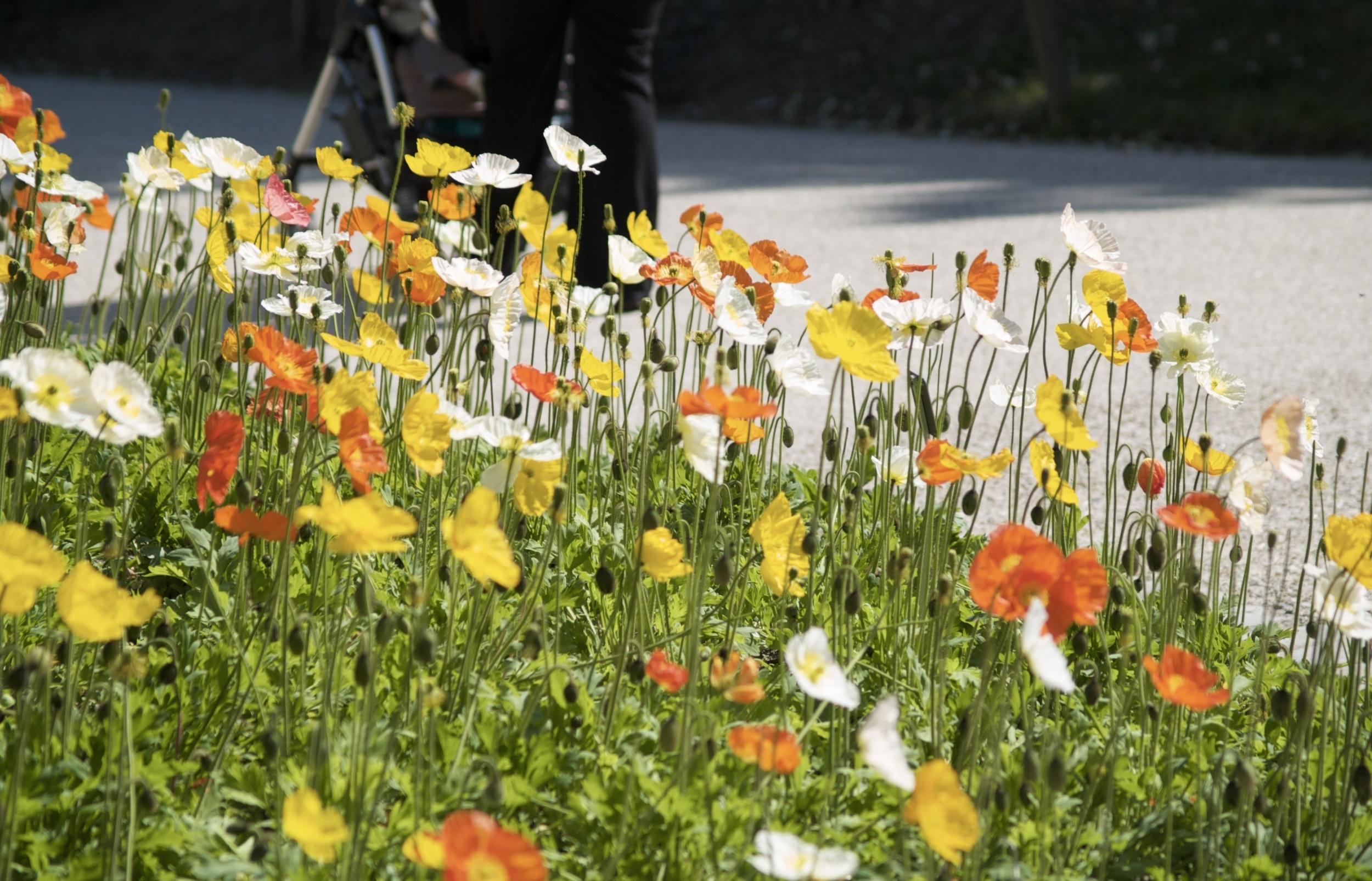 Spring Is Here Flowers