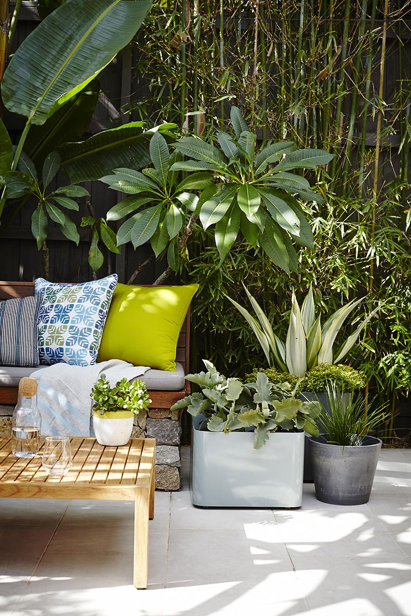 MODERN LOOK  pots from Garden Life and Tate, cushions and throws Tait and The Design Hunt, plants Alpine Nurserie, photography by Natalie Hunfalva
