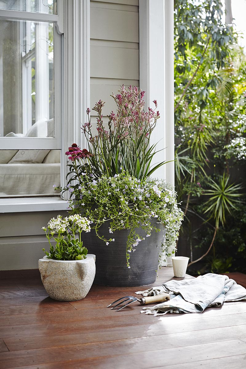 here we have used similar neutral tones for the pots and added depth by using tall plants with smaller ones