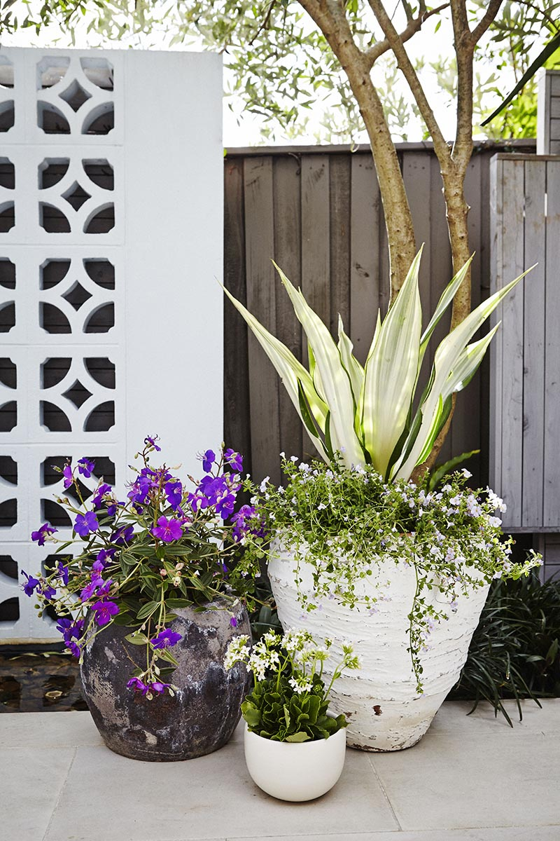 one of Adam's pot cluster designs for our Firelight project, featured in Gardening Australia