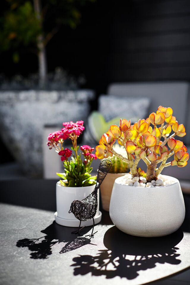 create an accent with a colourful plant choice and a personal touch with a small sculpture