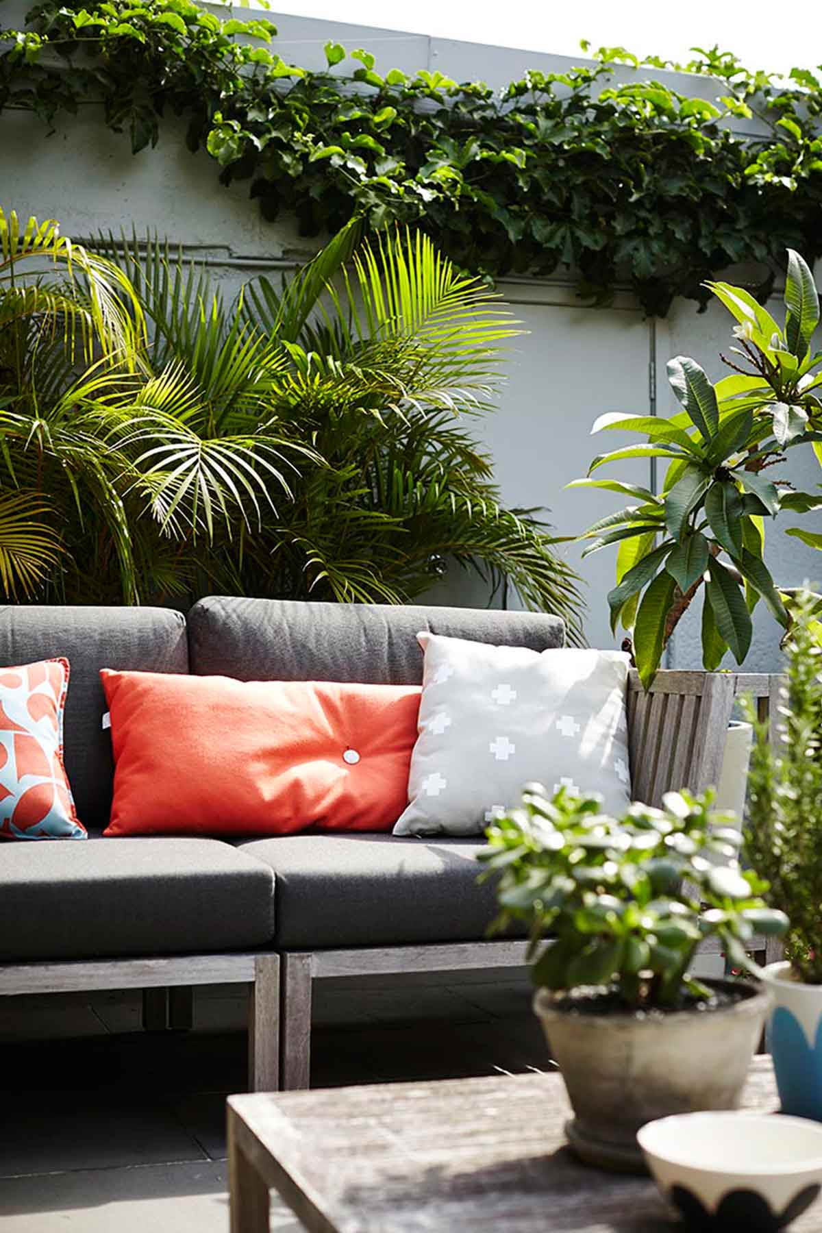 Pay attention not to over water potted plants. Image by Natalie Hunfalvay from our  Kingsford project