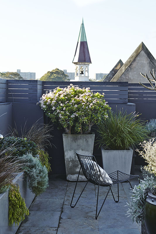A simple curved iron chair with a complimentary cushion from our  Redfern Rooftop & Balcony Garden project