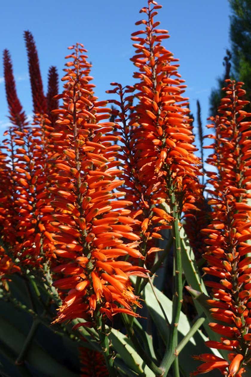 Adam Robinson Design Sydney Outdoor Design Styling Landscape Aloe Copper Shower 01.jpg